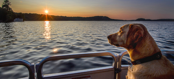 Taking your pets boating should you